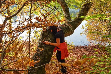 Baummeditation - Ruhe und Entspannung