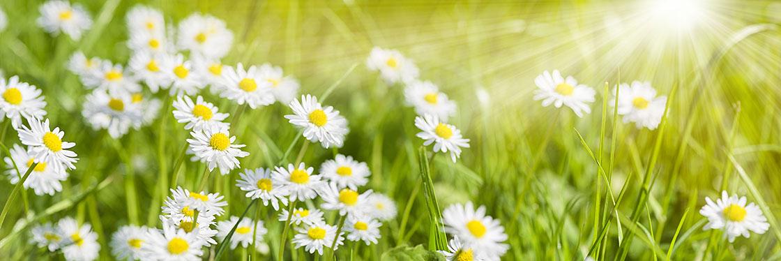 Naturheilpraxis für ganzheitliche Naturheilkunde und Psychotherapie
