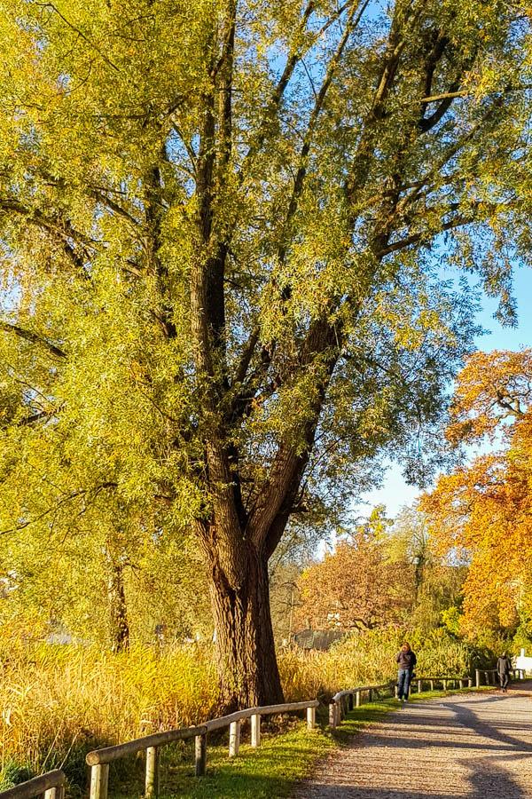 Herbstspaziergang bei Spätsommersonne